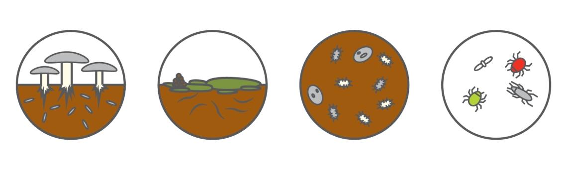 micro meso macro